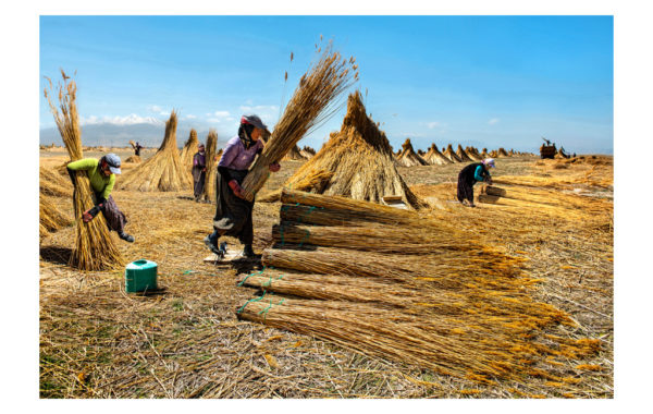 REED WORKERS IN ANATOLIA